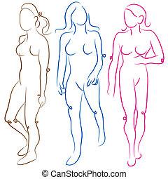 Female Body Shapes Set