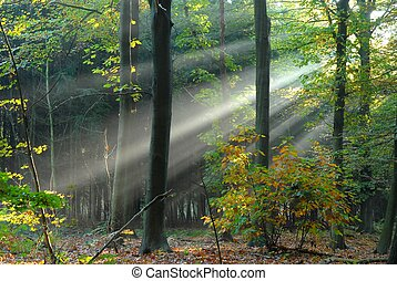 Beams of light pour through the trees
