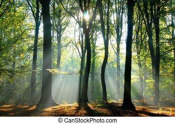 vigas, luz, despeje, através, árvores