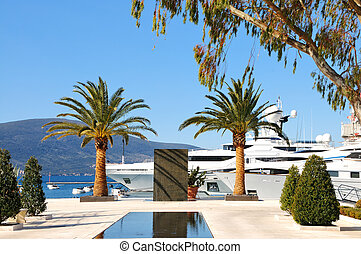Yachts and palms in the port - Description: Luxury motor...