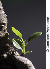 new life - little leaf from a tree