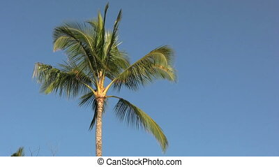 Palm Tree - a palm tree against a clear blue sky