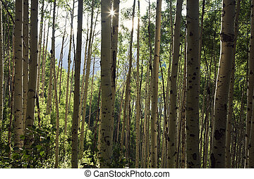 Trees in the mountains