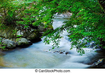 Namesawa Valleys, Fuji Hakone Izu  National Park, Japan.