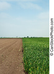 farm land - landscape shots of farm land near chatteris set...