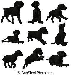 Puppy, black, labrador