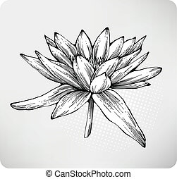 Water lily Illustrations and Stock Art. 3,011 Water lily ...