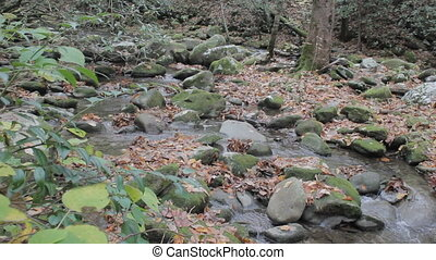 Small mountain stream