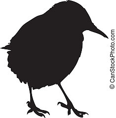 European Starling Silhouette - A silhouette of a European...