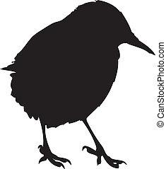 European Starling Silhouette - A silhouette of a European...