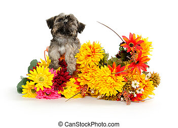 Shih Tzu puppy - Cute Shih Tzu puppy with colorful flowers...