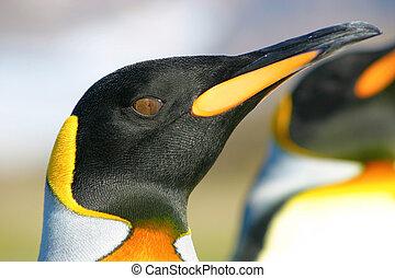 Headshot of king penguin
