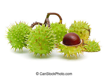 Chestnuts close up isolated on white background