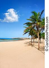 Arrecife Lanzarote Playa Reducto beach palm trees - Arrecife...