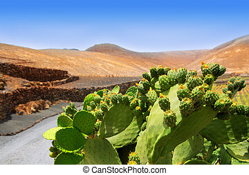Cactus Nopal in Lanzarote Orzola with mountains at Canary...
