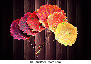 Six autumn aspen leaves in shades of red and yellow,...