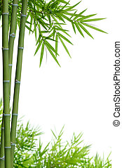 bamboo with leaves on white with copy space