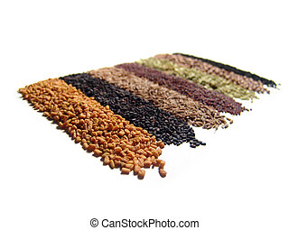 Indian Spices - 8 raws of Indian spices. Isolated on white....