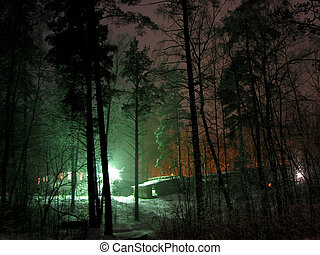 Winter night - The lights in the winter night forest