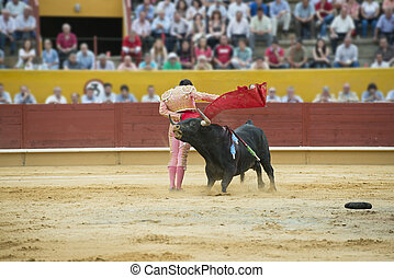 Bullfighting. - Typical Spanish bullfight in a traditional...