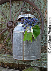 Concord Grapes - Cluster of grapes hanging out of an antique...