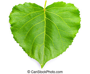 Green heart shaped leaf on white