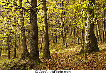 Autumn colors - scenery and autumn colors in the woods,...