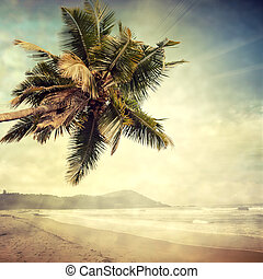 grunge palm-8 - grunge palm background
