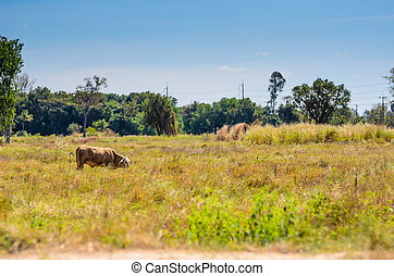 Cow on green grass