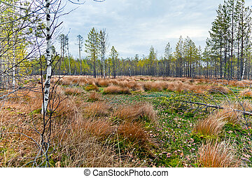 Autumn landscape with a bog.