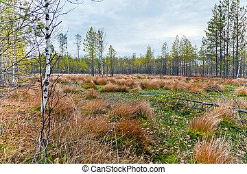 Autumn landscape with a bog.
