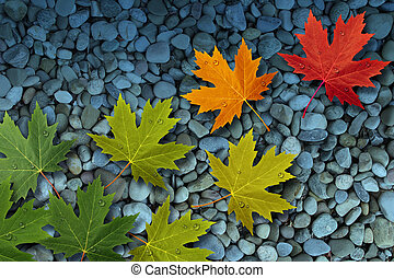 Autumn Leaves On Water - Autumn leaves floating over a...