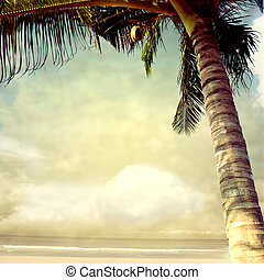 photobeach-17 - vintage palm background