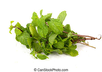Lemon balm herb leaf posy isolated over white background