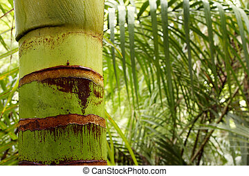 Tropical forest - Lush foliage in tropical forest