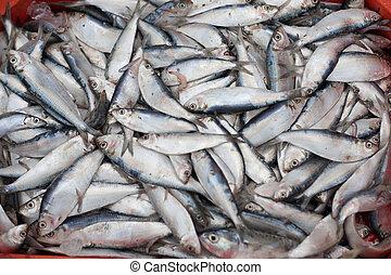 fresco, pez, caja, pescador