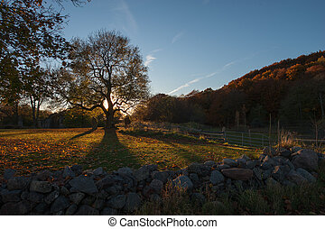 Old Oak tree in the autumn at Omberg, Ostergotland, Sweden