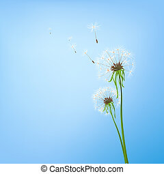 dandelions - two dandelions in wind on light blue background