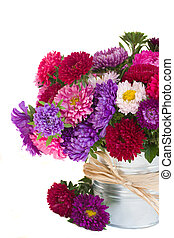 aster flowers - aster flowers in vase isolated on white...