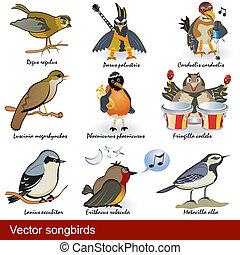 vector, Pájaros cantor