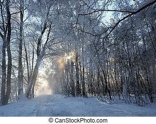 Winter landscape - Road in a wonderful winter forest