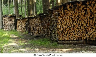 firewood stock in a forest - fuelwood storage in a forest
