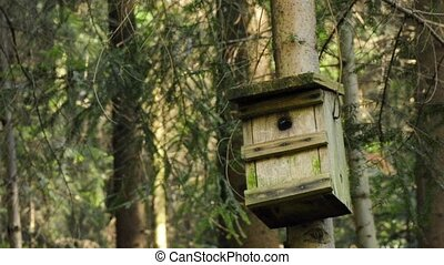 Bird`s house on a tree