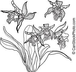 Floral design elements - Set of floral design elements -...
