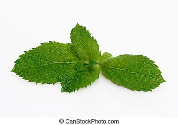 Peppermint leaves on white background