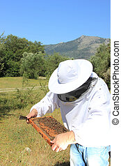 bee keeper with bee colony