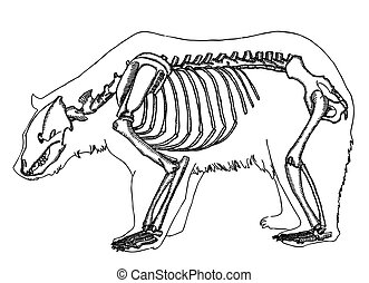 bear skeleton  - bear skeleton- black on white