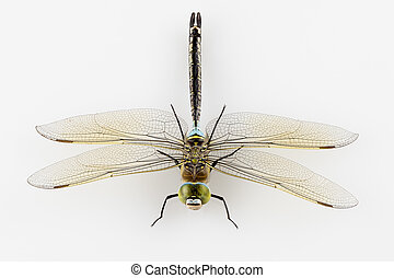 Dragonfly isolated - Dragonfly Anax parthenope isolated on...