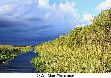 Subtropical Everglades - subtropical view of Everglades
