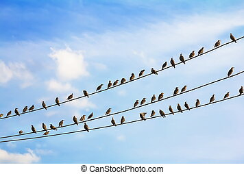 a flock of birds sitting on three wires against the blue sky